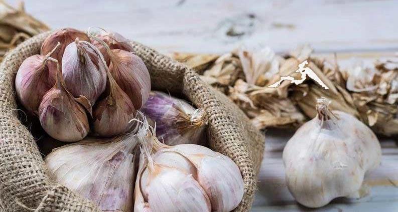 pure-garlic