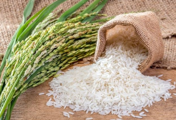 rice export-tava commercial group
